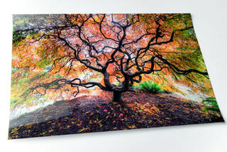 Fuji Flex Super Gloss Silver Halide Fine Art Print