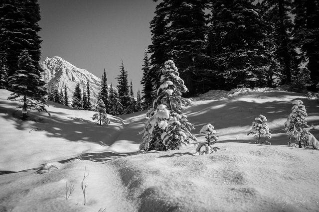 winter wonderland, winter, kautz creek trail, mt rainier national park, mt rainier, snow, photo, christmas card, christmas