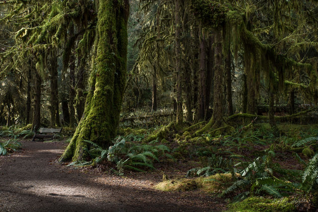 hoh rainforest, olympic national park, olympic peninsula, landscape, green, moss, trees, magical, rainforest