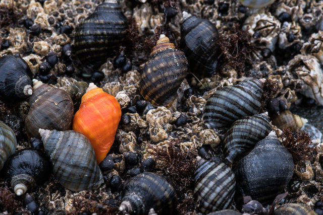 be different, second beach, orange shell, orange, shell, unique