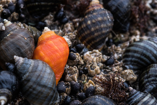 different, second beach, beach, photograph, sea life, orange, seashell, symbolism, shell