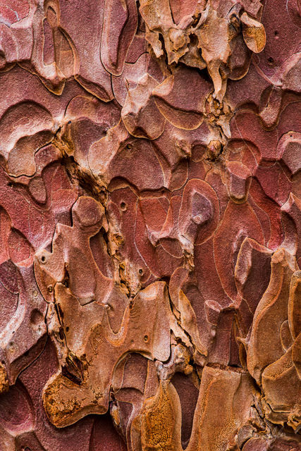 designs, tree, ponderosa pine, bryce canyon, bryce canyon national park, bark, stunning, macro