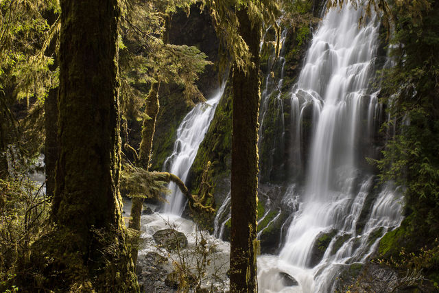 settings, washington, waterfall, composition, mossy forest, mossy, forest