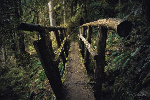 journey, bridge, washington, footbridge,