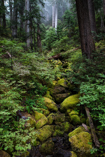 calming, forest, hiking, camera, tripod, mt rainier, mt rainier national park