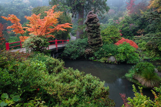 garden, tranquility, kubota gardens, seattle, colors, textures, fog, mood, perfect, scene