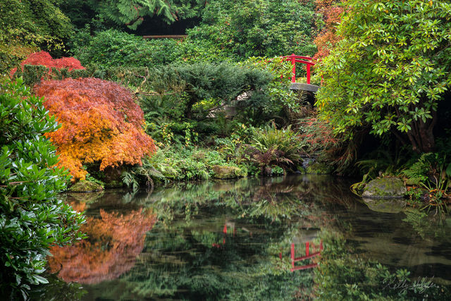 bridge, reflection, gardens, kubota gardens, peaceful