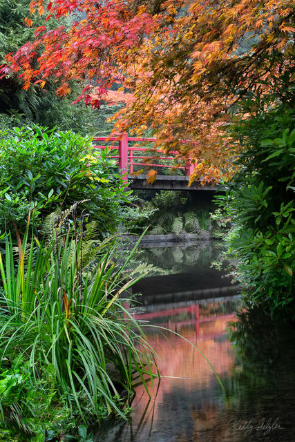 relax, kubota gardens, gardens, exploring, seattle, fall colors, colors, heavenly