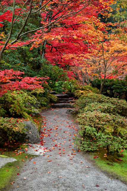path, color, park, seattle japanese gardens, seattle, gardens, colors, fall