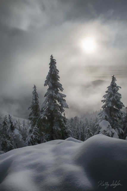 mt ellinor, olympic mountains, washington, fog, dramatic, quiet, snow, freshly fallen snow