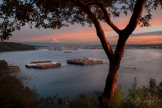 madrone, tree, sunset, tacoma, gorgeous