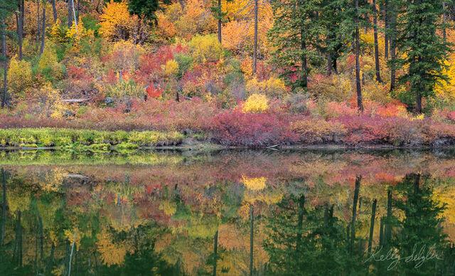 Autumn Vibrance