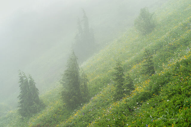 Layers of Green and Yellow