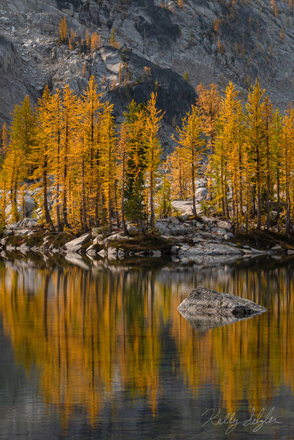 larches, golden, mountainsides, Washington, fall, magical