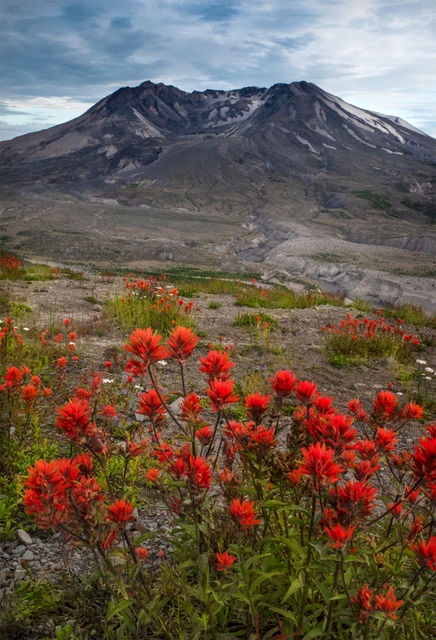 indian paintbrush, bloom, mt st helens, beautiful, wildflowers, photo, power, nature