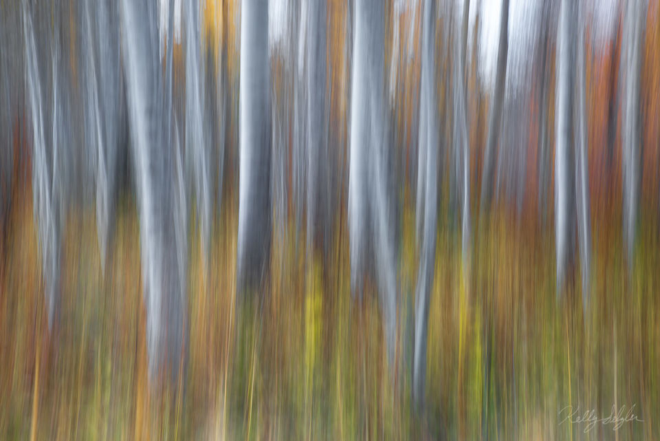 abstract, aspens, leavenworth, aspen trees, trees, photograph, fall, photo, camera motion, abstract photo, aspen forest, forest