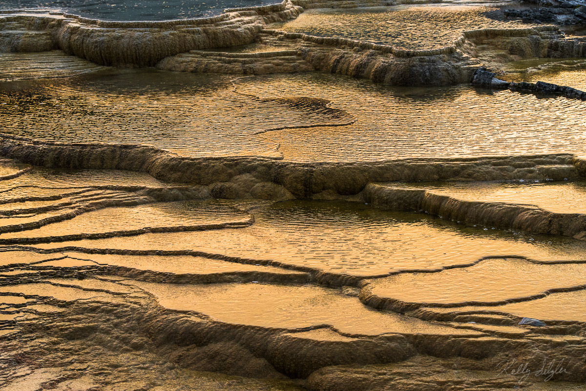 Golden Glow | Mammoth Hot Springs, Yellowstone National Park, WY