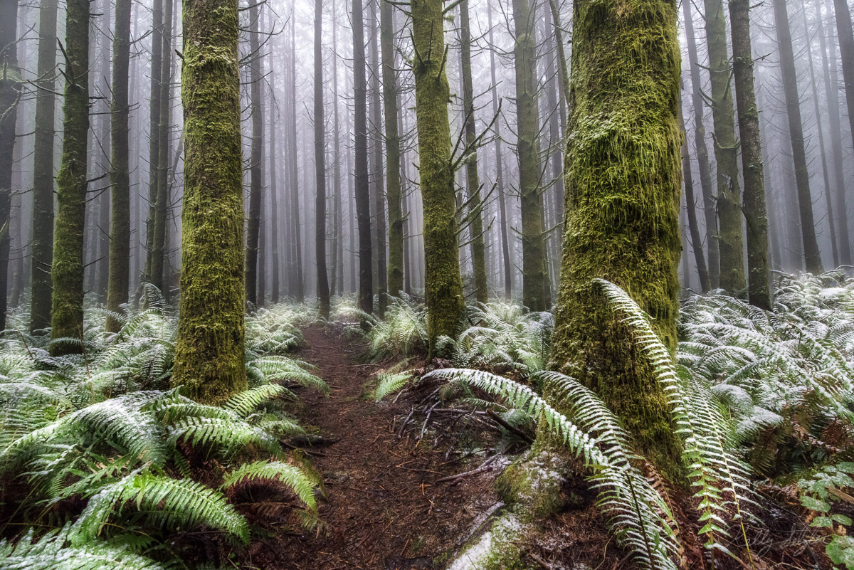 This forest was like something out of a movie. With the thick fog and light dusting of snow on the ferns, I felt like I was in...