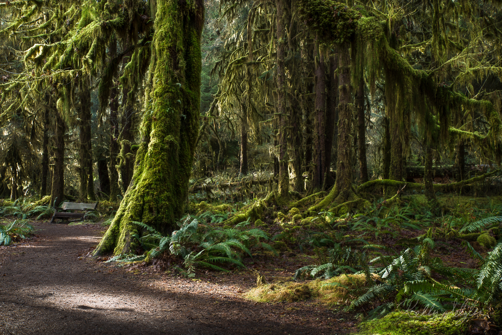 hoh rainforest, olympic national park, olympic peninsula, landscape, green, moss, trees, magical, rainforest, photo