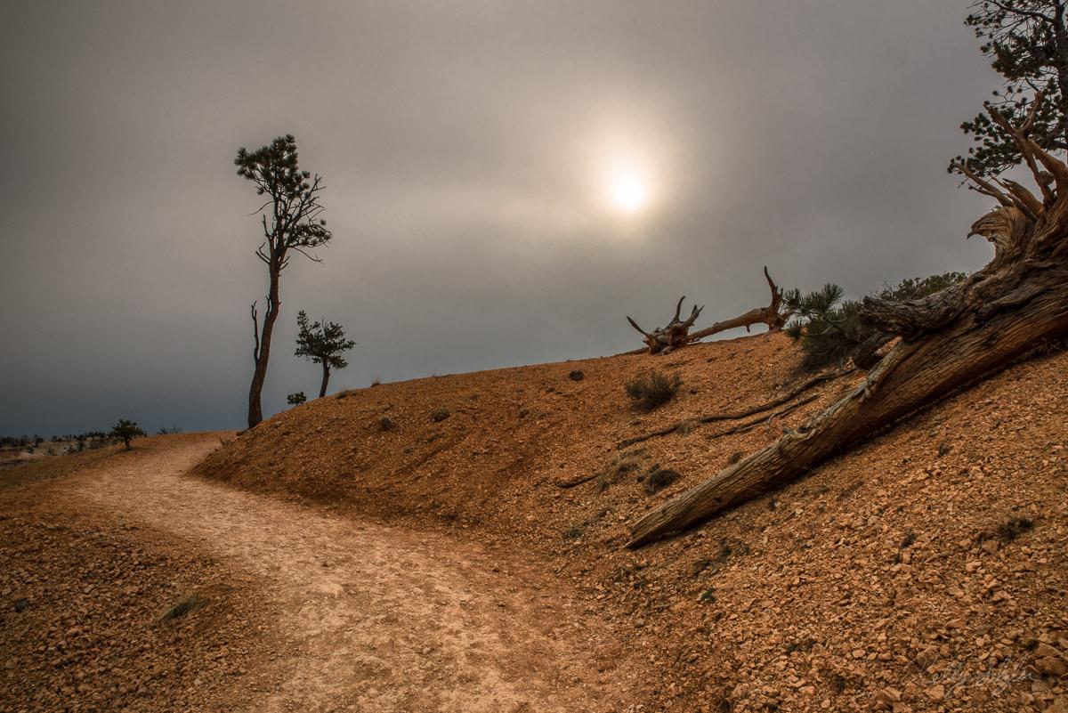 desolate, bryce canyon, bryce canyon national park, sun, fog, landscape, isolation, emptiness, photo