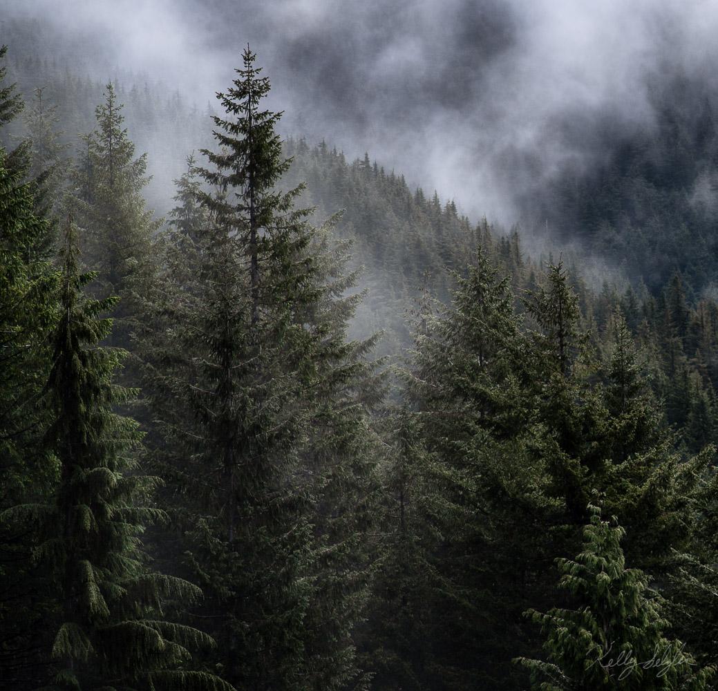 atmosphere, washington, fog, fir trees, photograph, moods, photos, photo