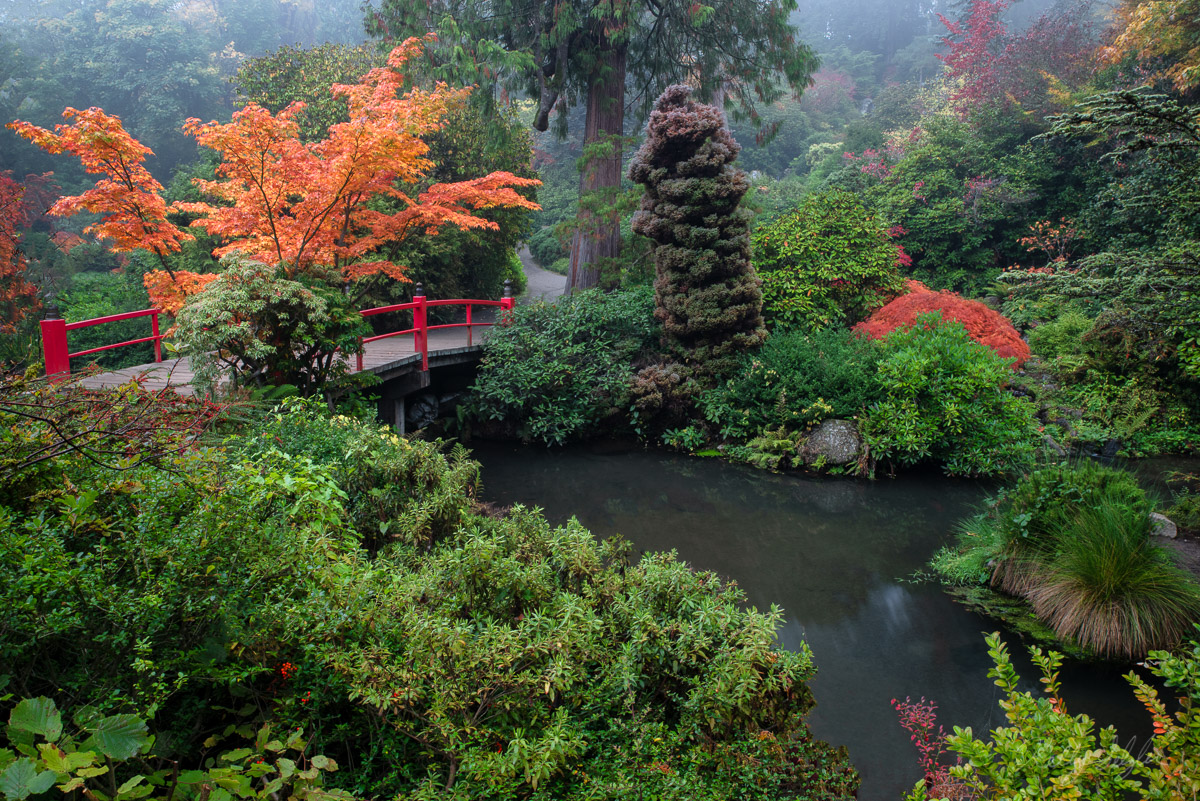 garden, tranquility, kubota gardens, seattle, colors, textures, fog, mood, perfect, scene, photo
