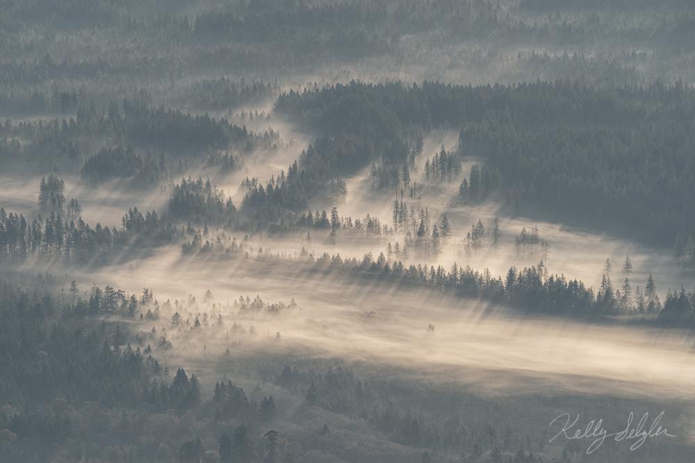 Painted in Fog