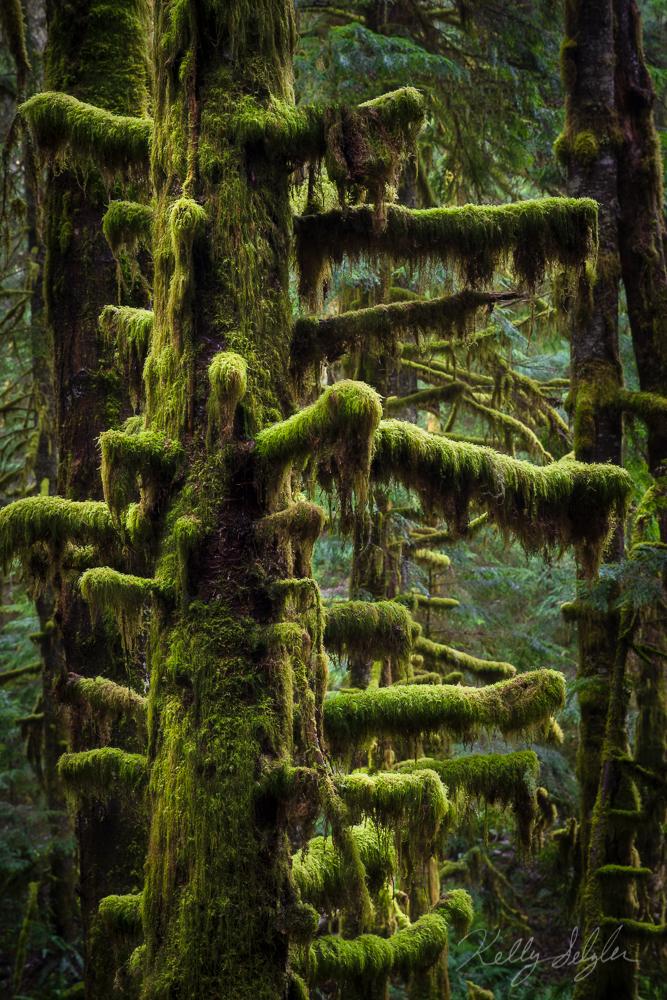 Trees of Magic