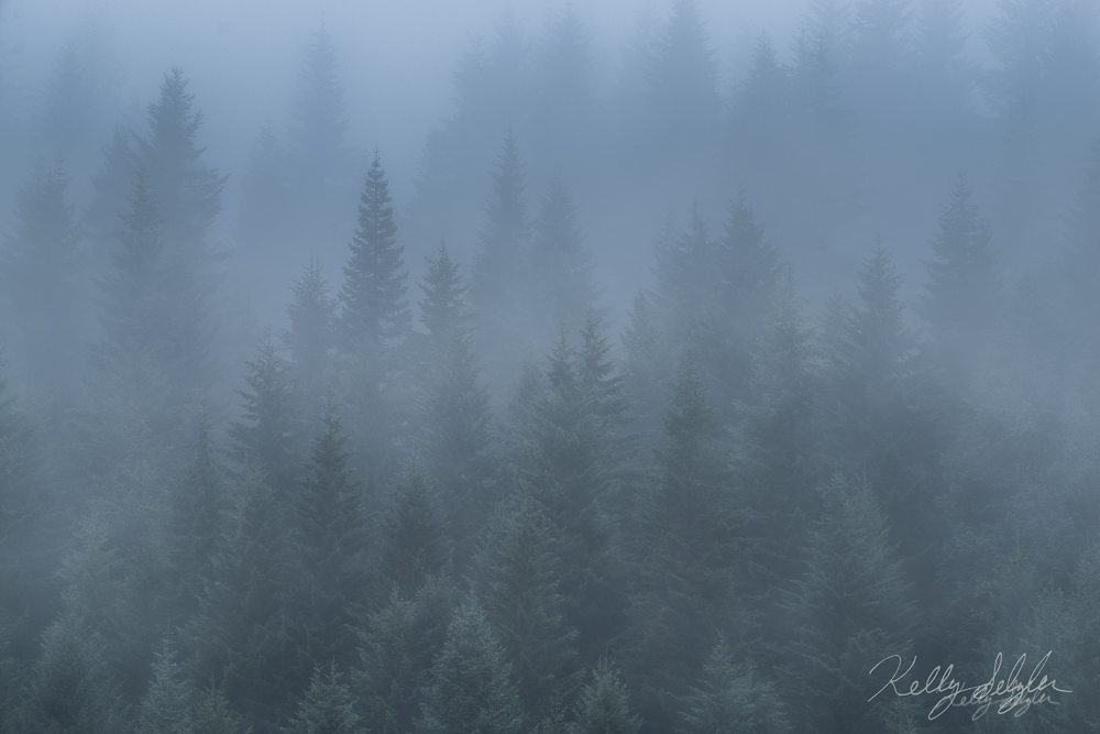 A foggy morning meant I wasn't going to capture Mt. Hood at sunrise as I had hoped, but I was still able to come away with an...
