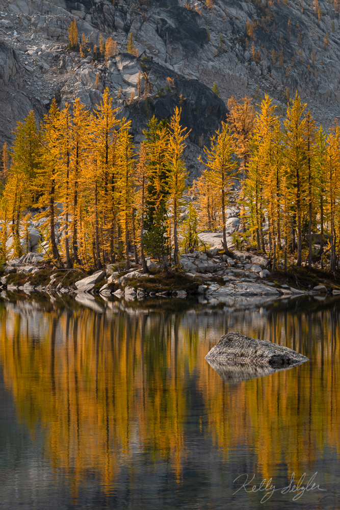 The golden larches that bless the mountainsides in small areas of Washington state every fall are a magical sight to see.